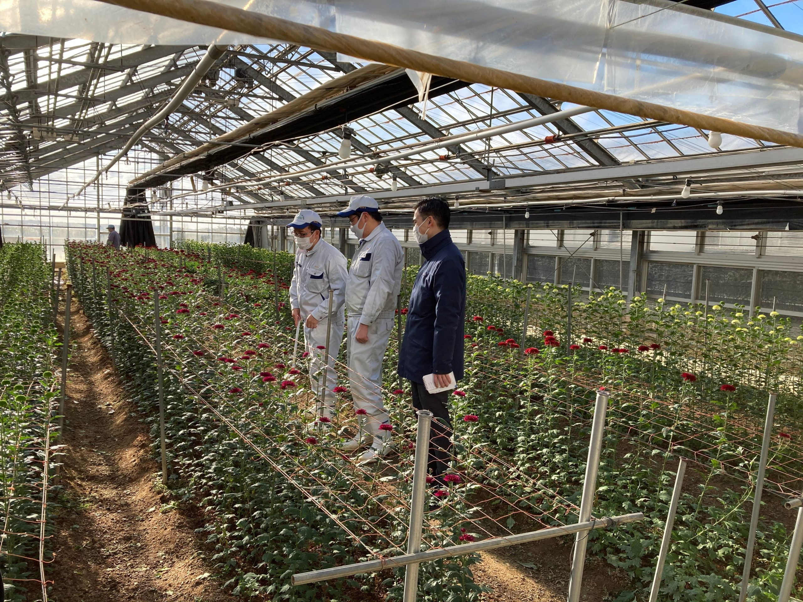 国内初「花」の認証審査実施